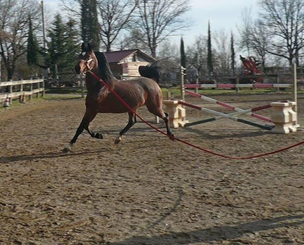 Addestramenti equitazione toscana