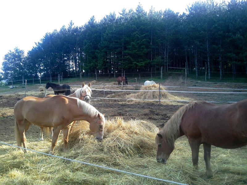 cavalli casentino