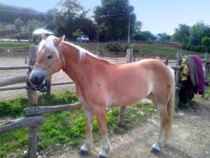 cavalli_2