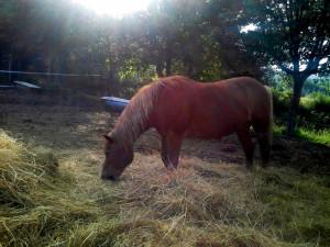 cavalli_3