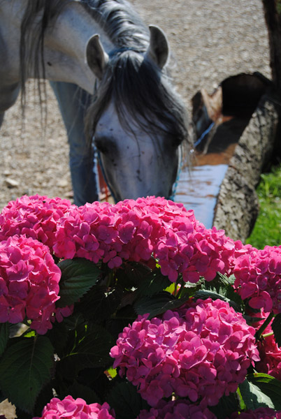 Cavalli San Donato