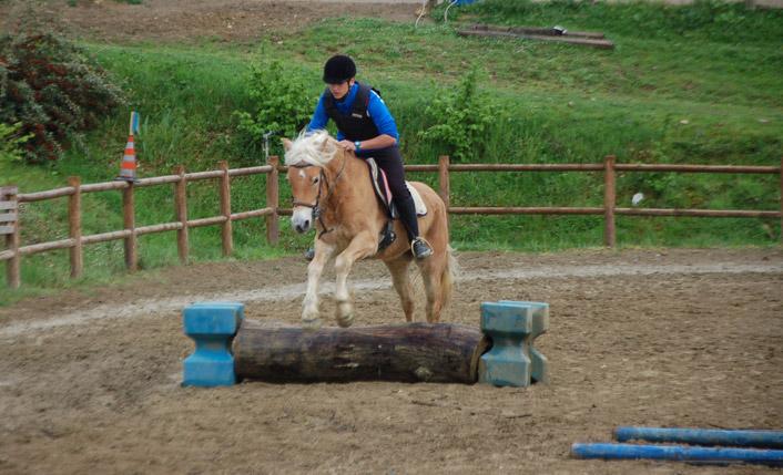 cavallo casentino